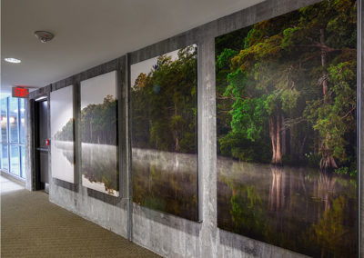 Chowan River in the Hall